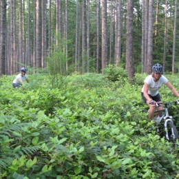 Bike ride of the month in Powell River: Twisted Sister