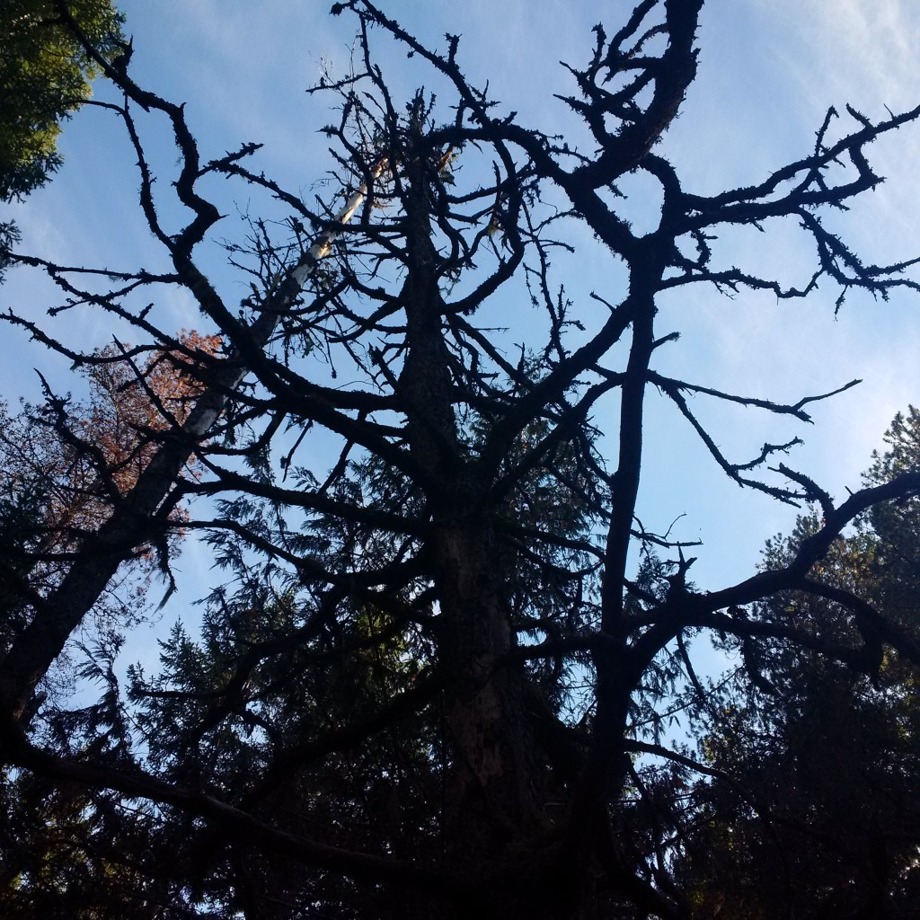 A tree straight out of a Tim Burton movie.