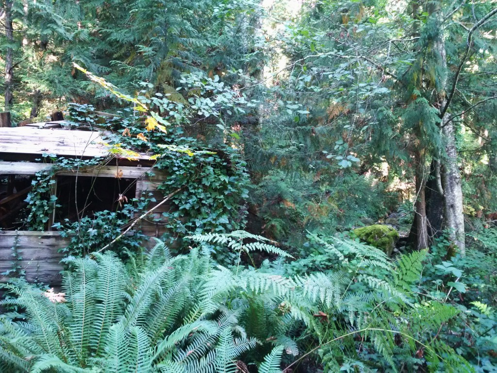 Once upon a time, there was a cottage in the woods.