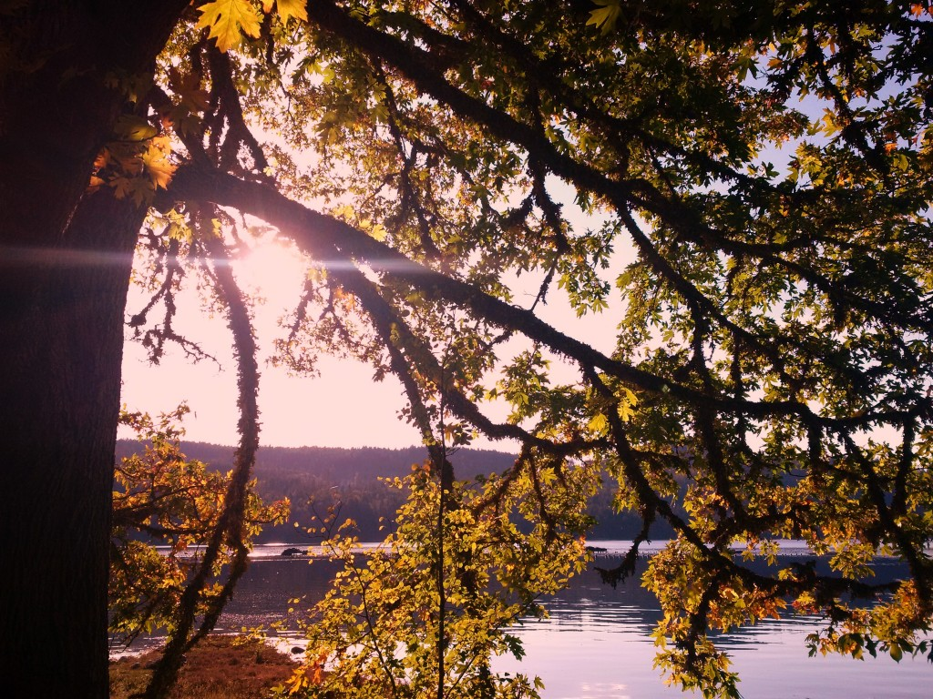 These are the days of golden sunshine and leaves just as golden.