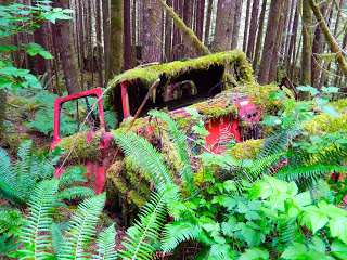 One of many treasures found in the backcountry of Powell River