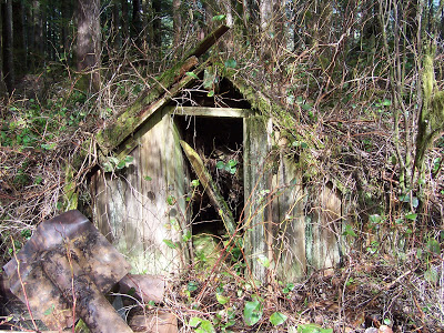 Probably a root cellar at the shake block cutter's camp at the Head.