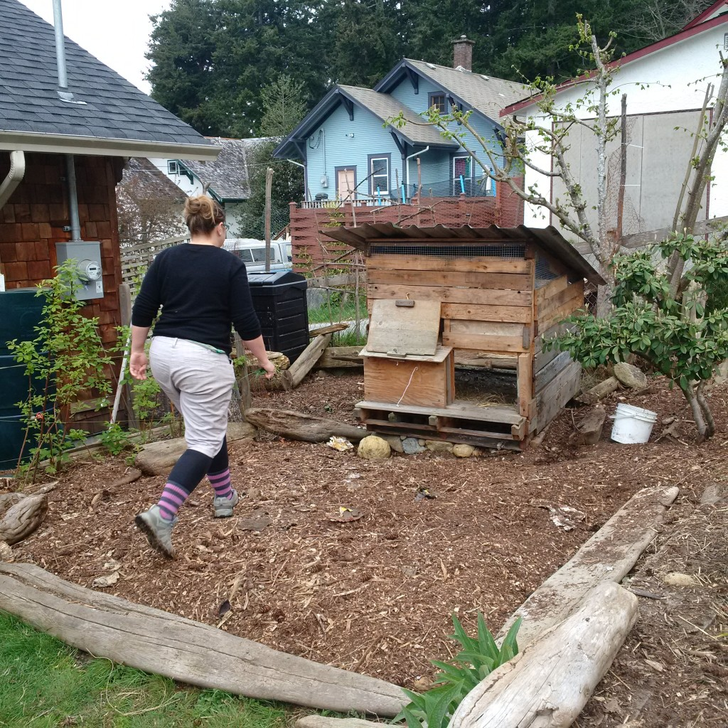 The no-cost coop where three chicks live.