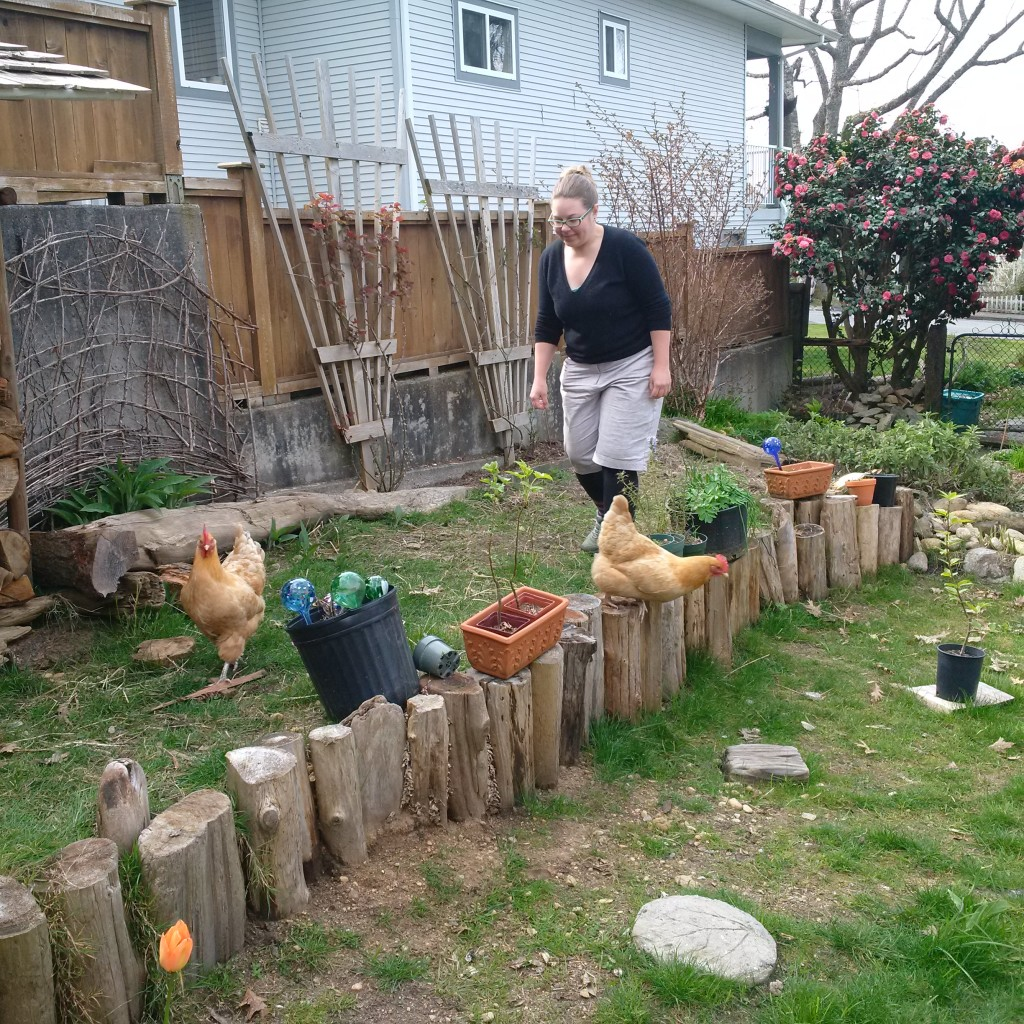 Fun with chickens.