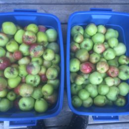 Adventures on Texada Island: 3 Apple-Hacks for your Fall Harvest
